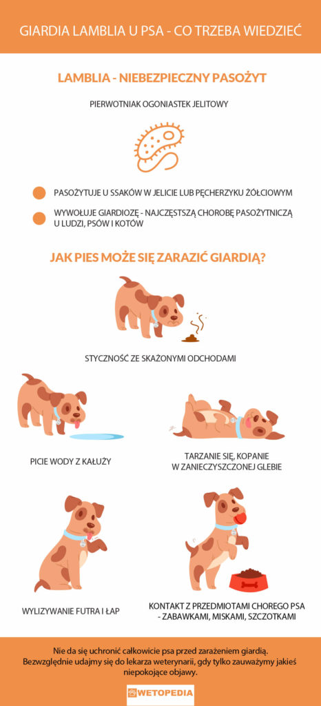 giardia u psow